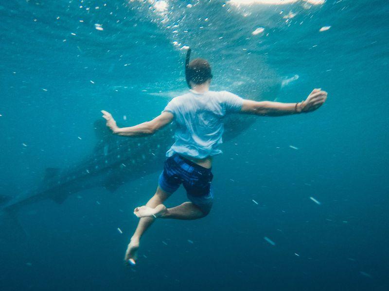 潛水遇到鯨鯊