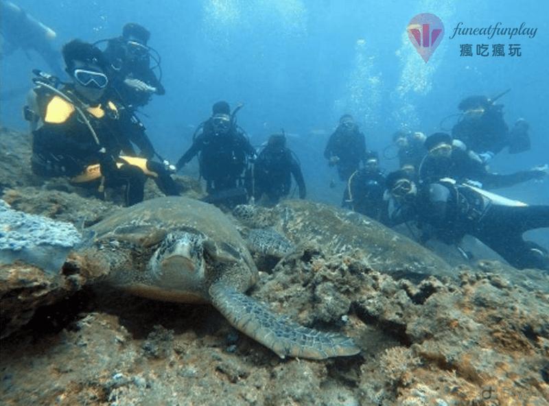 潛水與海龜