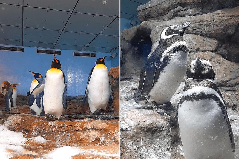 XPARK水族館企鵝照片