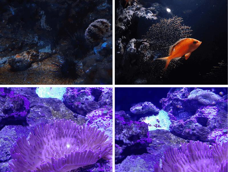 XPARK水族館珊瑚、海膽、魚照片