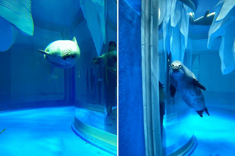 XPARK水族館海豹照片