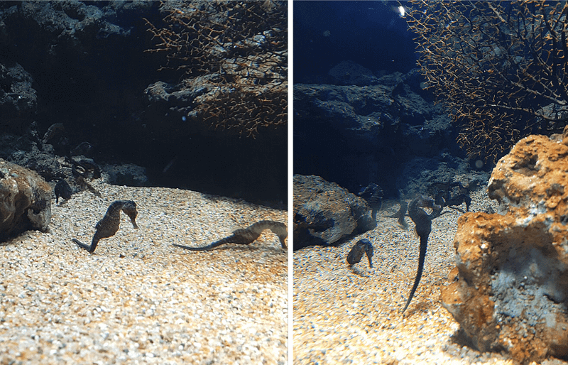 XPARK水族館海馬照片