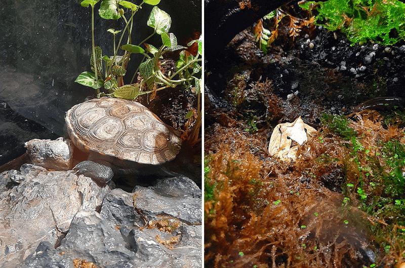 XPARK水族館青蛙、象龜照片