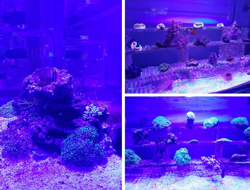 XPARK水族館珊瑚照片