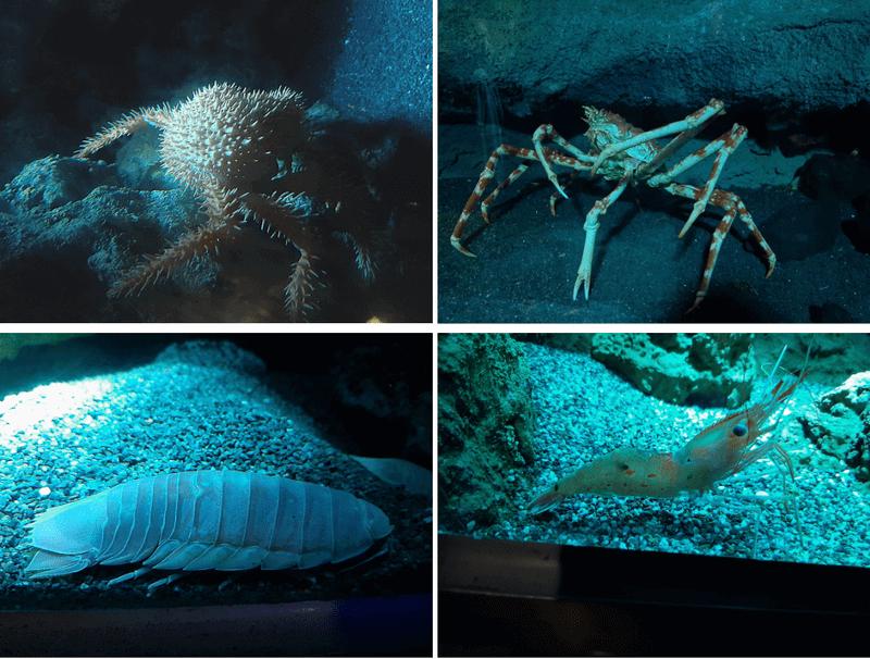 XPARK水族館深海魚照片