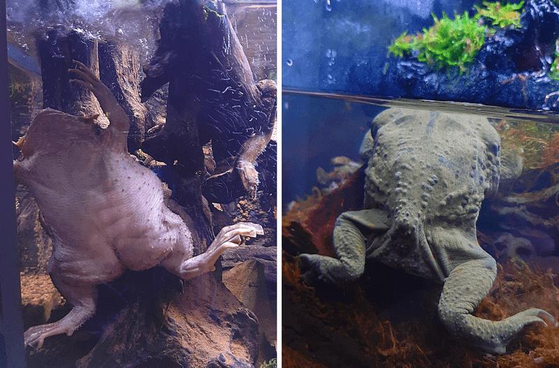 XPARK水族館蟾蜍照片