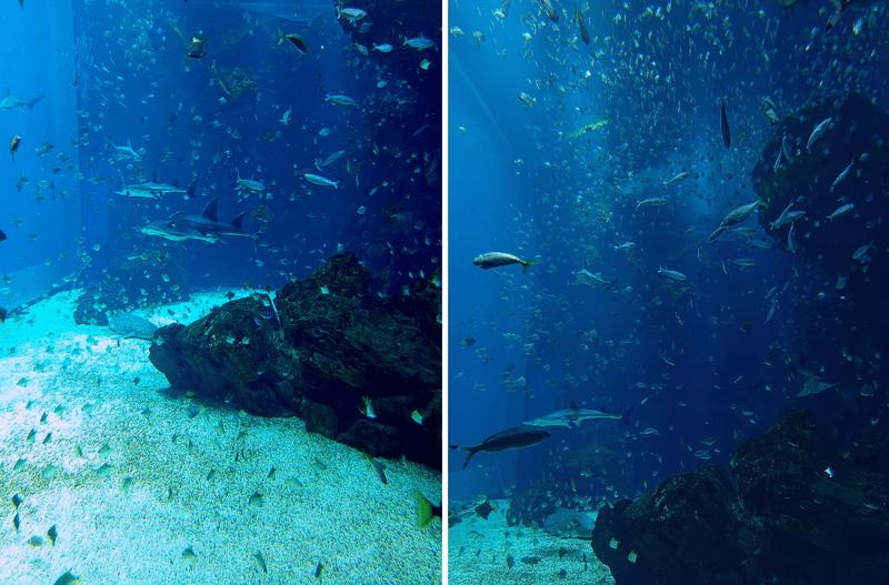 XPARK水族館最大魚缸照片 有鯊魚昌魚無數小魚