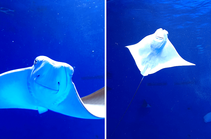 XPARK水族館魟魚照片