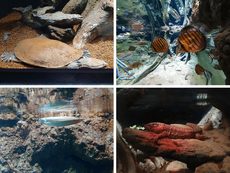 XPARK水族館鱉、魚、科摩多龍照片
